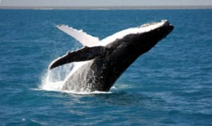 Whale_Watching_AOC_web